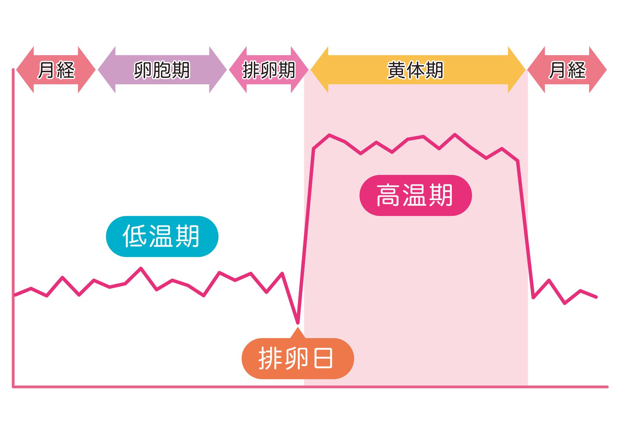 女性の月経周期